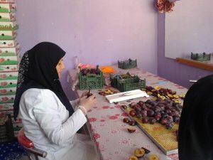 اشتغال زایی ۱۵۰ نفری بانوی کارآفرین  آذربایجانی با چیپس میوه